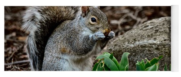 Squirrel And His Dinner Yoga Mat