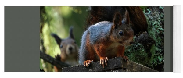 Squirrels Yoga Mat