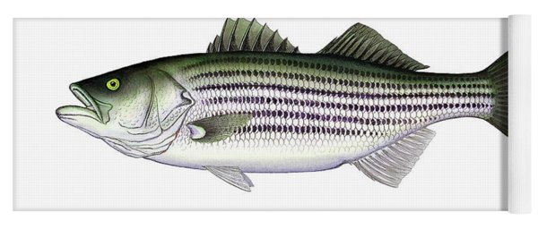 Striped Bass Yoga Mat