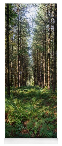 Yoga Mat featuring the photograph Tall Trees In Sherwood Forest by Scott Lyons