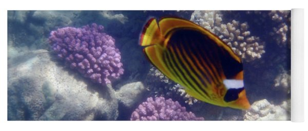 The Adorable Raccoon Butterflyfish Of The Red Sea Yoga Mat