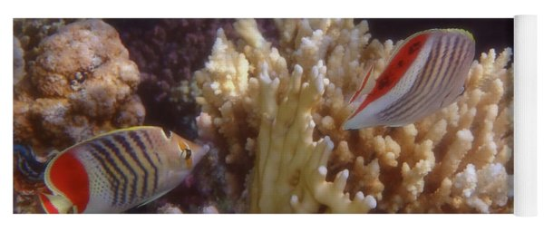 The Crown Butterflyfish Of The Red Sea Yoga Mat