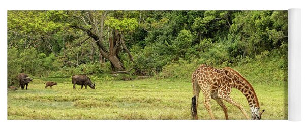Yoga Mat featuring the photograph The Giraffe And The Cape Buffalo by Kay Brewer