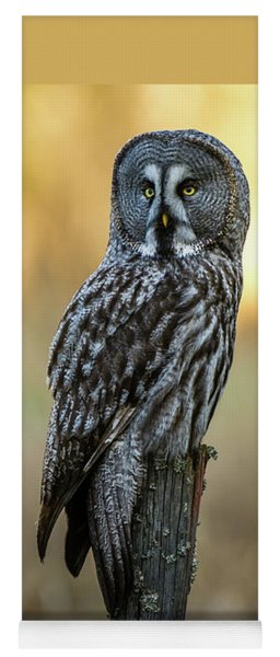 The Great Gray Owl In The Morning Yoga Mat