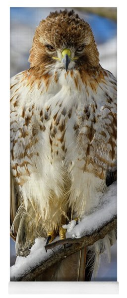The Look, Red Tailed Hawk 1 Yoga Mat