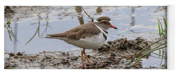 Three-banded Plover Yoga Mat