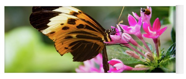 Tiger Longwing Butterfly Drinking Nectar  Yoga Mat