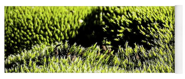 Yoga Mat featuring the photograph Tiny Forest 2 by Atousa Raissyan