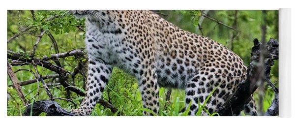 Tree Climbing Leopard Yoga Mat