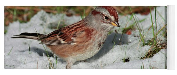 Tree Sparrow In Snow Yoga Mat