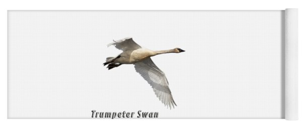 Trumpeter Swan Isolated 2018-2 Yoga Mat