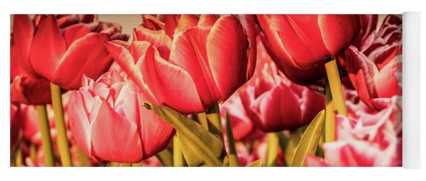 Yoga Mat featuring the photograph Tulip Fields by Anjo Ten Kate