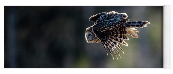 Ural Owl Flying Against The Light To Catch A Prey  Yoga Mat