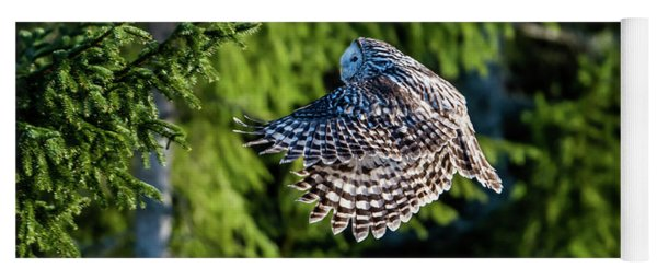 Ural Owl Flying In The Fir Forest With Sunshine On Its Back Yoga Mat