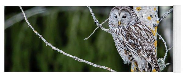 Ural Owl Perching On An Aspen Twig Yoga Mat