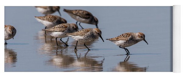 Western Sandpipers And Reflection Yoga Mat