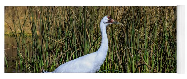 Whooping Crane In Pond Yoga Mat