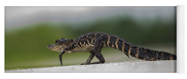 Why Did The Gator Cross The Road? Yoga Mat