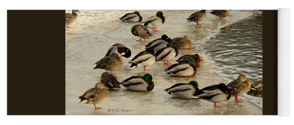 Wild Ducks Resting On Ice Yoga Mat