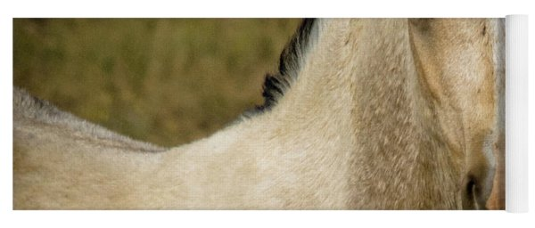 Wild Mustangs Of New Mexico 5 Yoga Mat