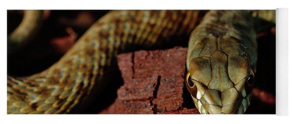 Wild Snake Malpolon Monspessulanus In A Tree Trunk Yoga Mat