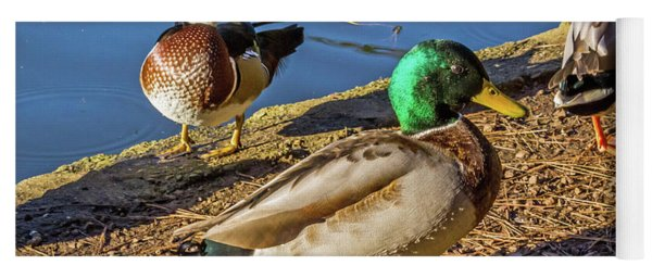 Wood Duck And Mallards Yoga Mat