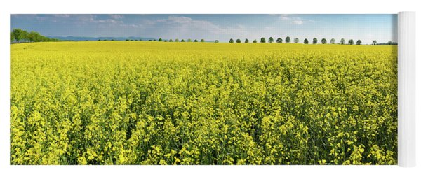 Yellow Canola Field And Blue Sky Spring Landscape Yoga Mat