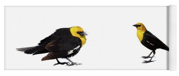 Yellow Headed Blackbird  Yoga Mat
