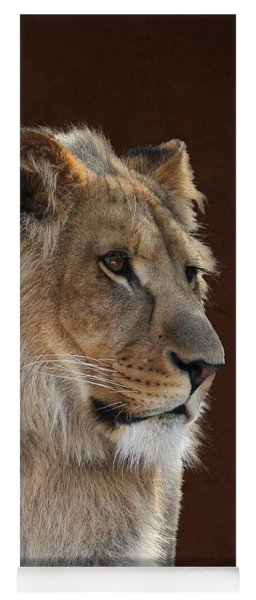 Yoga Mat featuring the photograph Young Male Lion Portrait by Debi Dalio