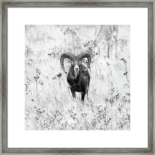(   ) Framed Print