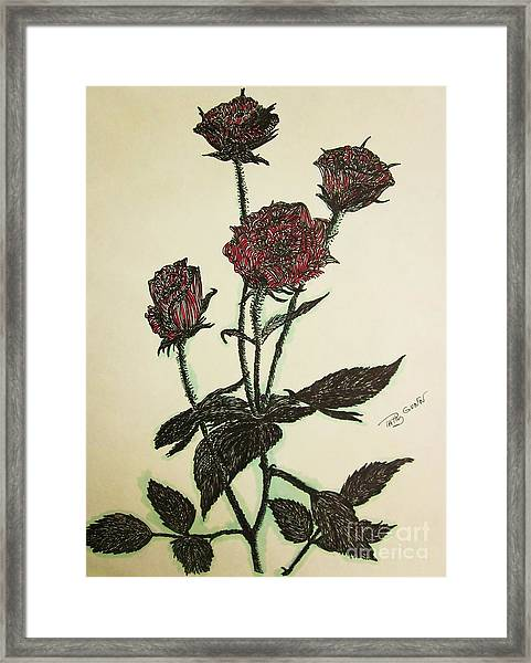 A Garden Rose Framed Print