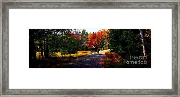 Acadia National Park Carriage Trail Fall  Framed Print