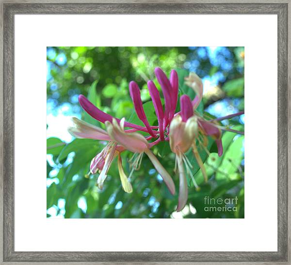 Birth Of Clematis Framed Print