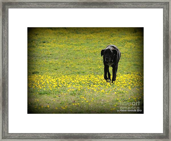 Cody In Black And Yellow Framed Print