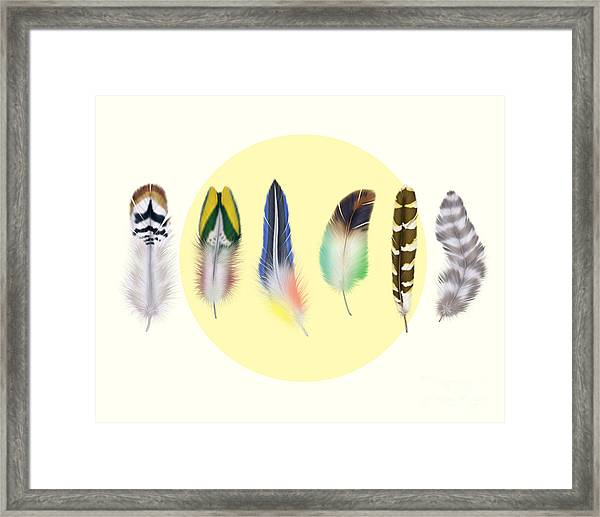 Feathers 2 Framed Print