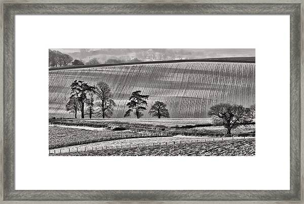Fields And Trees Framed Print
