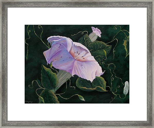 First  Trumpet Flower  Of Summer Framed Print