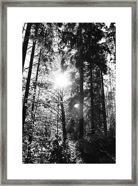 Forest Framed Print by Falko Follert