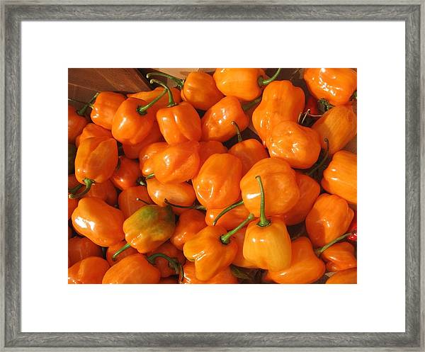 Habanero Peppers Framed Print
