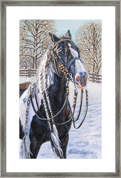 I'm Ready For The Ribbons Gypsy Vanner Horse Framed Print