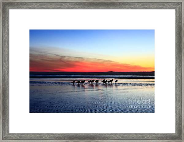 Shorebird Sunset Framed Print