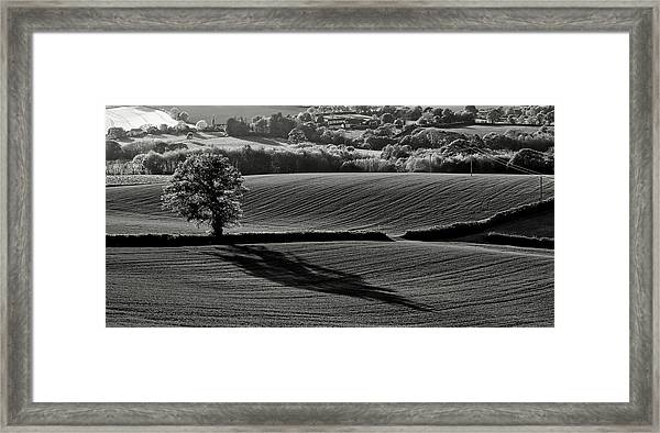 Tree And Shadow Framed Print