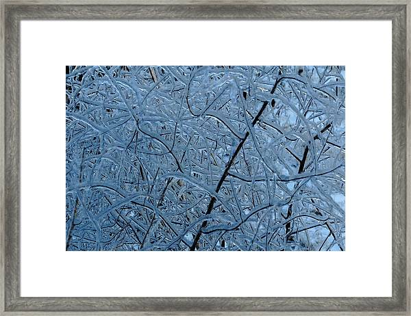 Vegetation After Ice Storm  Framed Print