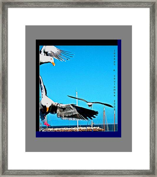 West Coast Sea Birds Framed Print