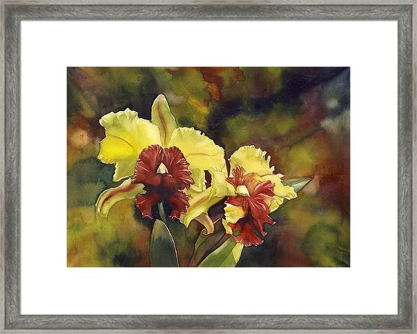 Yellow And Red Cattleya Orchids Framed Print