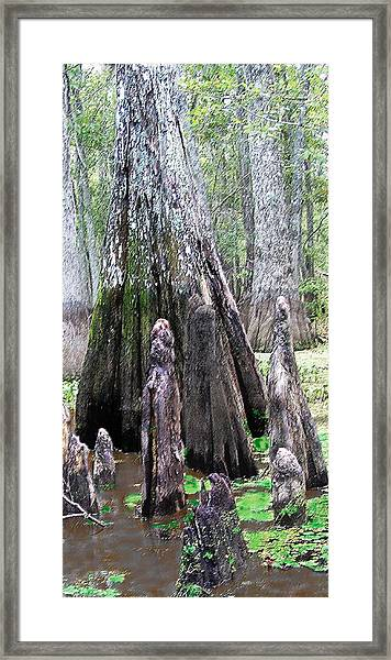 02102015 Honey Island Swamp Framed Print