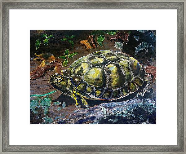 05042004 Box Turtle Framed Print