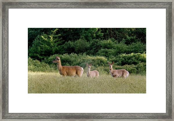 072506-3  Out For A Walk With The Twins Framed Print by Mike Davis