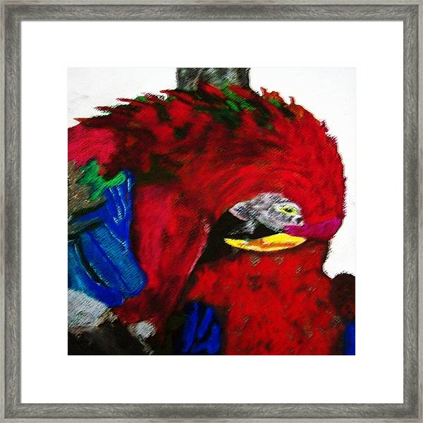 08222012 Parrot Grooming His Mate Framed Print