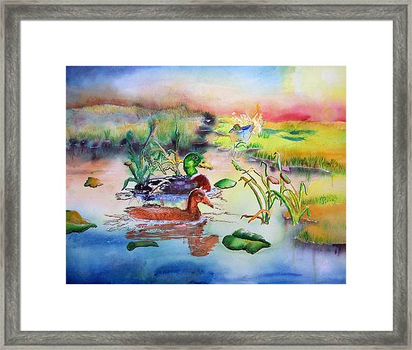 082814 Mallards At Dawn Framed Print